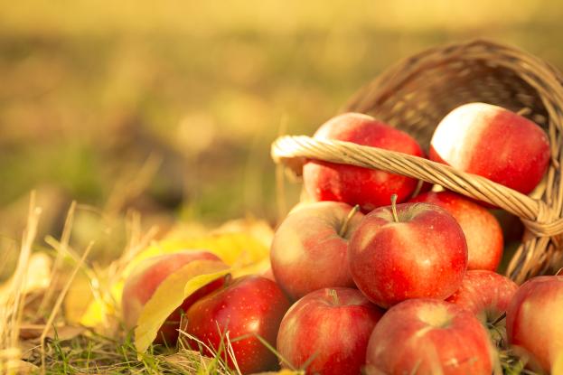 Ayurvedic Diet for September Image