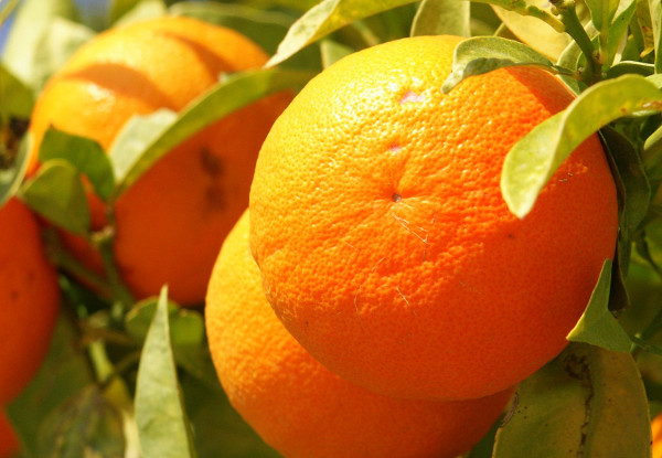 Orange Ayurveda Medicinal Properties