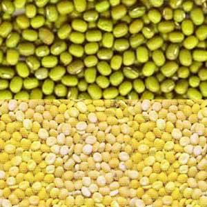 Ayurveda Lifestyle Mung Bean