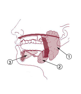 Mouth & Teeth () Ayurveda