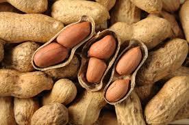 Peanuts Ayurvedic Perspectives