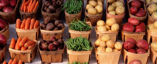 Study Ayurveda Food Diet