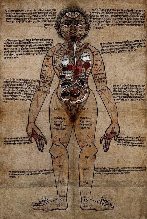 Ayurveda Anatomy
