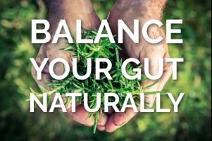 Ayurveda Digestive Herbs