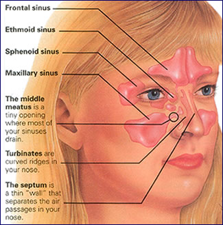 Jaw facial nerve tooth stuffy nose